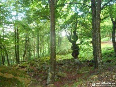 Valles Pasiegos;rutas trekking viajes naturaleza floracion jerte agencias viajes madrid